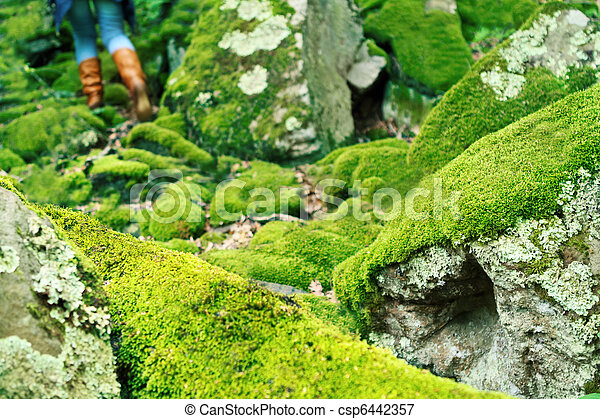Mossy large rocks in the forest - csp6442357