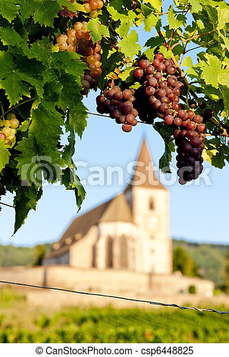 church with vineyard, Hunawihr, Alsace, France - csp6448825