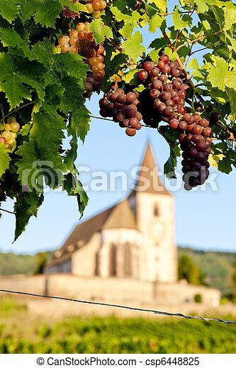 church with vineyard, Hunawihr, Alsace, France - csp6448825