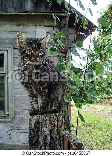 Rural cat - csp6455367