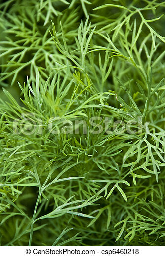 Weed dill - csp6460218
