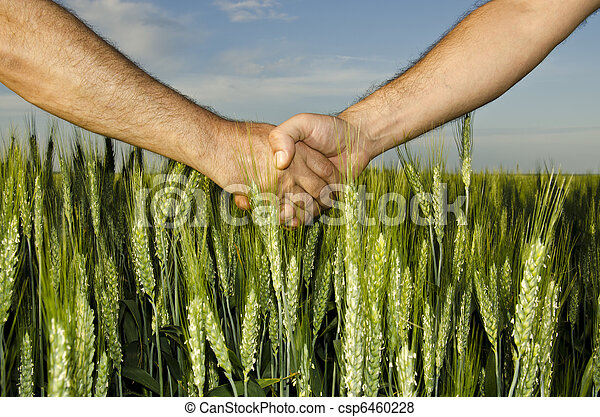 Shaking hands in the field - csp6460228