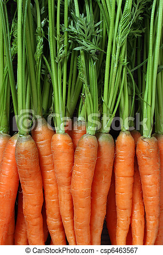 Bunch of carrots - csp6463567