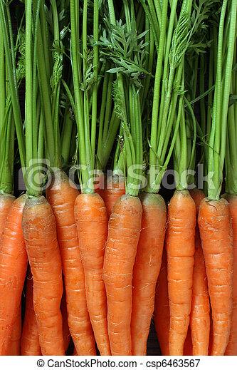 Bunch of carrots - csp6463567