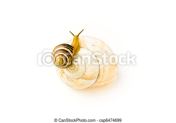 Snail climbs to bigger and nicer house - csp6474699