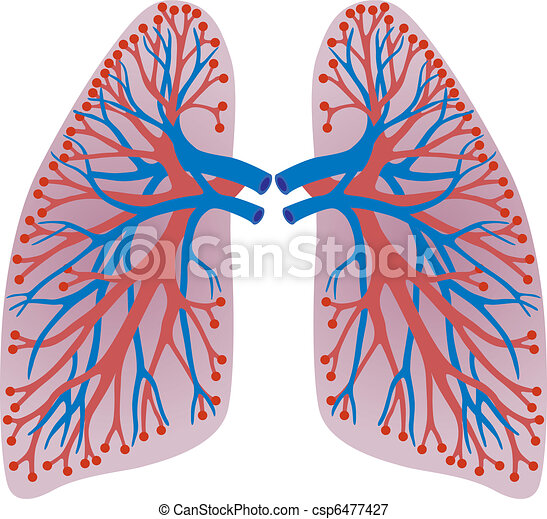 lungs of the person  - csp6477427