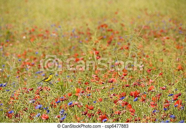 Small songbird in wild flowers - csp6477883