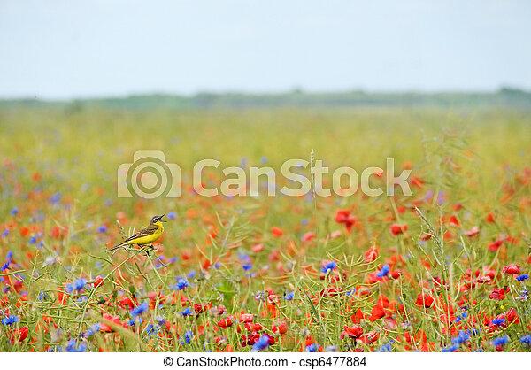 Small songbird in wild flowers - csp6477884