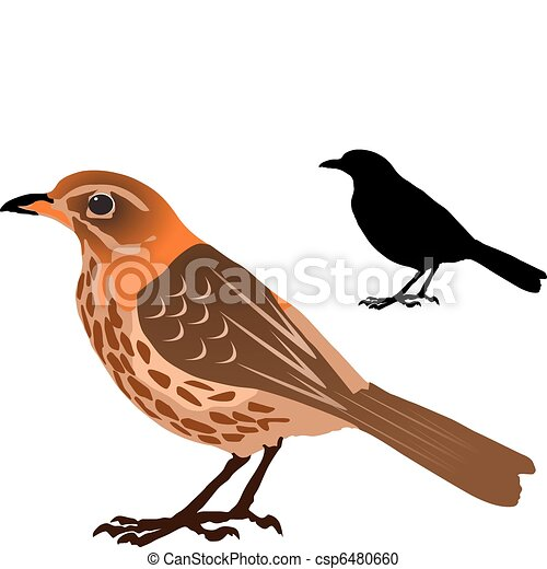 Song Thrush - csp6480660