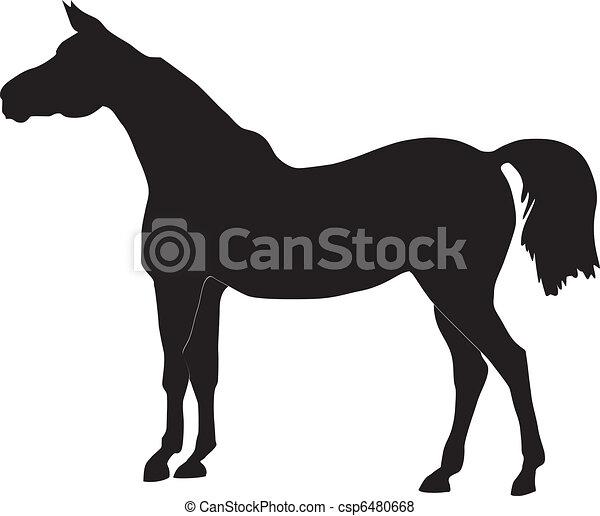 horse - csp6480668