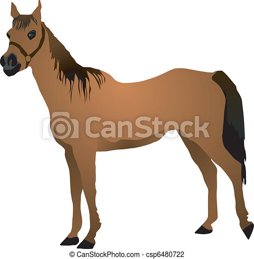 horse - csp6480722