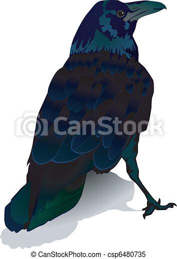 crow - csp6480735