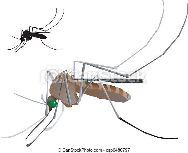 vectors mosquito - csp6480797