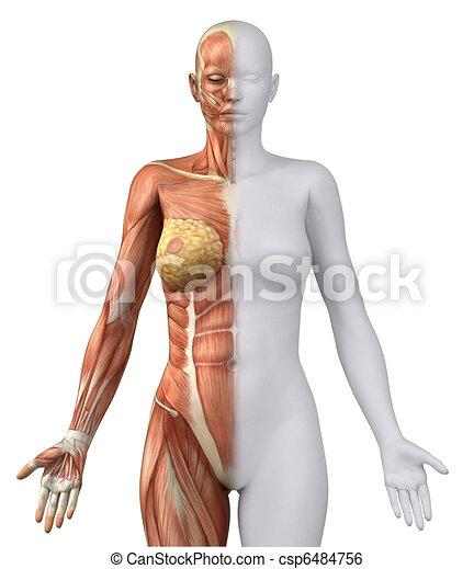 White female figure in anatomical position anteriror view - csp6484756