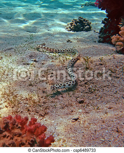 Stock foto fleckig schlange aal rotes meer koralle riff