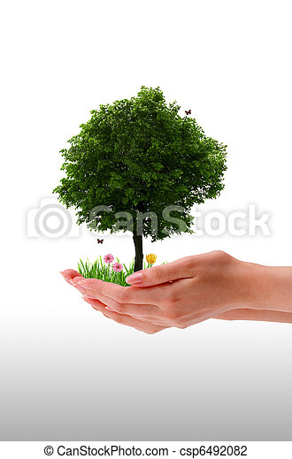 Tree - Hand - csp6492082