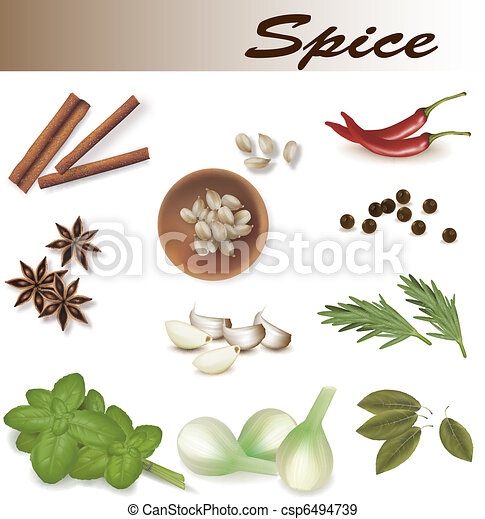 Group of spices. Vector.  - csp6494739