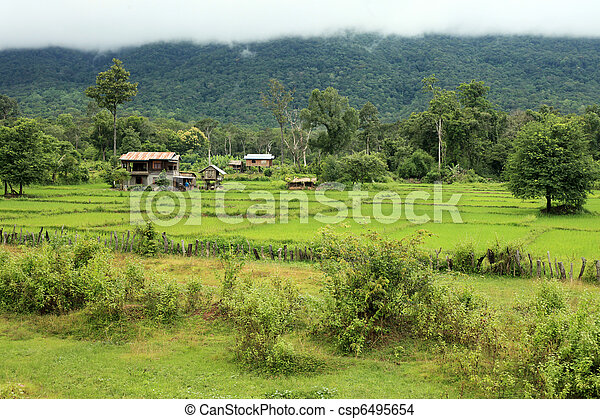 Rice Fields - Laos - csp6495654