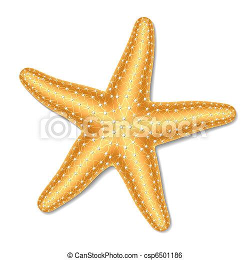 Starfish - csp6501186