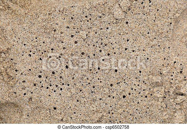 Sand Crab Holes - csp6502758