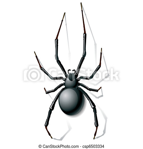 Black widow spider - csp6503334