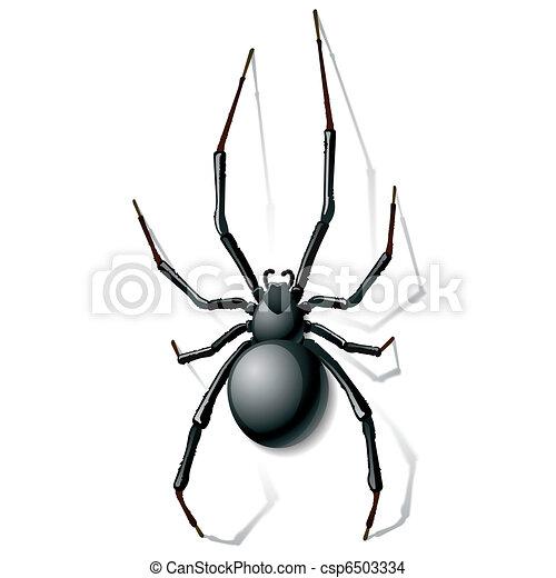 Black widow spider - csp6503334