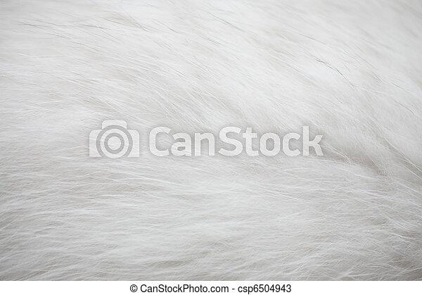 White fur texture background - csp6504943