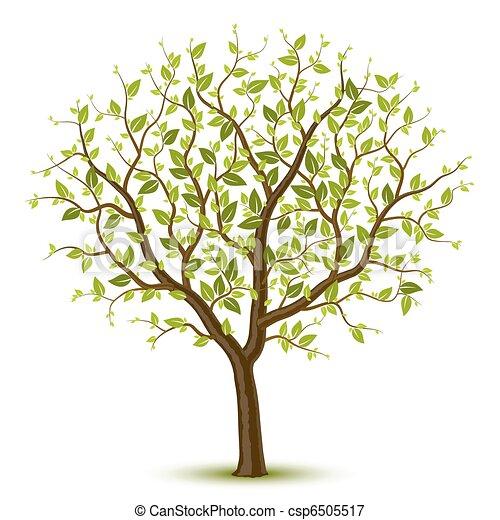 綠色, 樹,  leafage - csp6505517