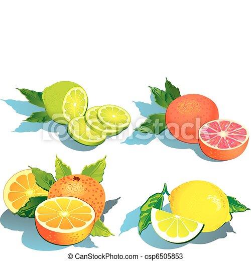 Citrus fruits. - csp6505853