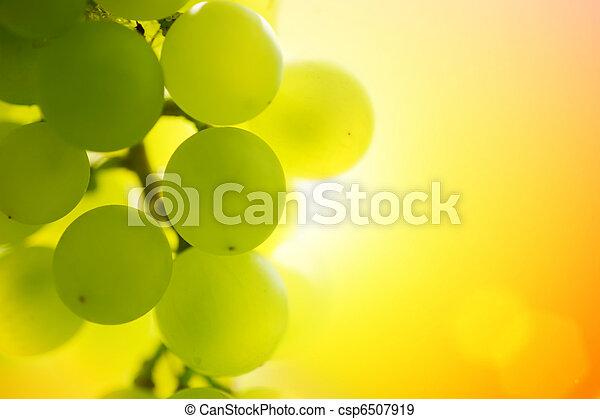 Grapes at sunset - csp6507919