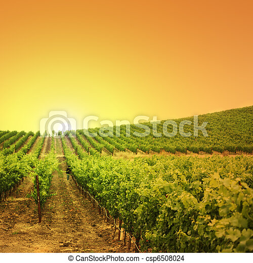 Vineyard on a hill - csp6508024