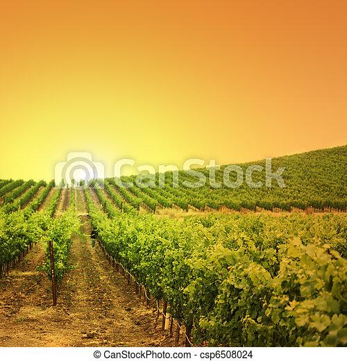 Vineyard on a hill - csp6508024