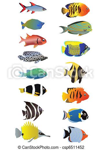 aquarium - csp6511452