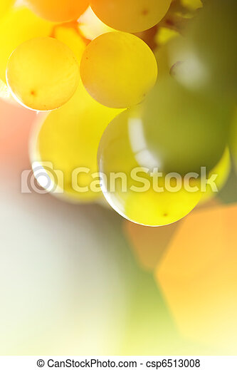 Bunch of grapes - csp6513008