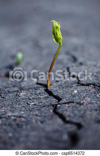 Growing plant - csp6514372