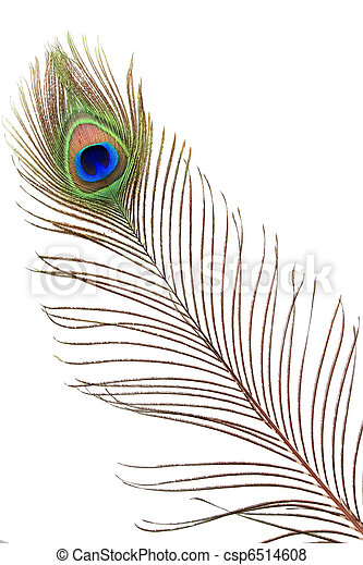 Detail of peacock feather eye - csp6514608