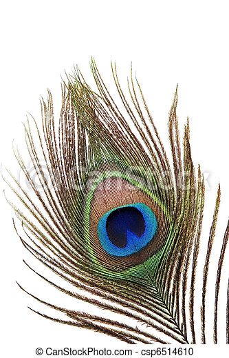 Detail of peacock feather - csp6514610
