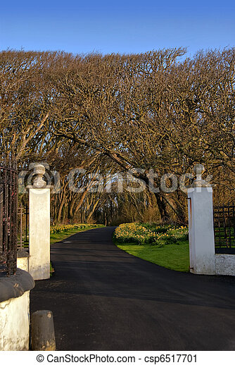 Entrance Gate with White Pillars and Driveway leading into Forrest with Blue sky - csp6517701