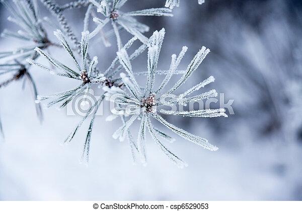 Needles in winter - csp6529053