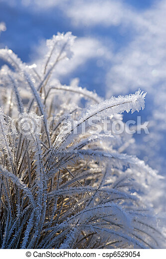 close up of grass with rime frost in winter - csp6529054