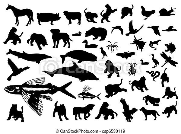 Animal Symbols - csp6530119