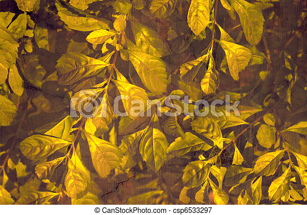 Golden leaves on rich grunge wall background - csp6533297