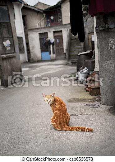 Red cat in narrow street - csp6536573