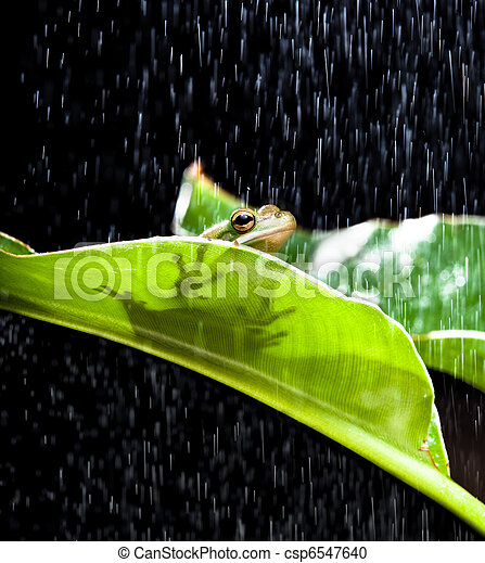 Frog in the rain - csp6547640