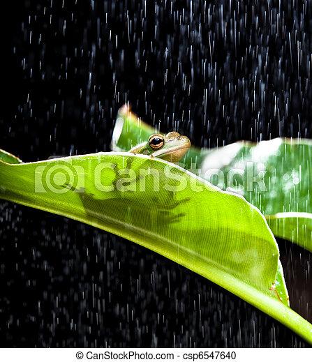 Frog in the rain - csp6547640