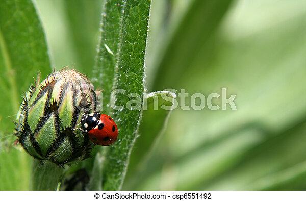 Lady Bug on a Bulb - csp6551492