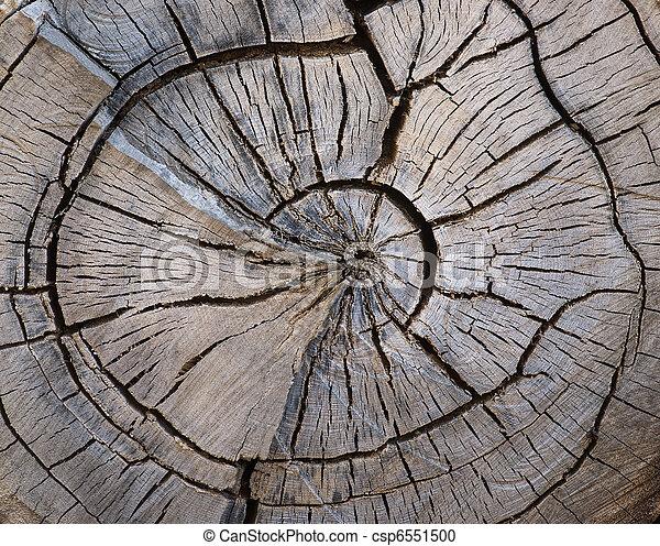 Split tree trunk - csp6551500