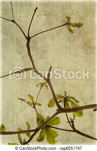 Almond tree branches on ribbed canvas - csp6551747