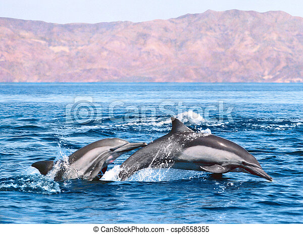 Two Dolphins - csp6558355
