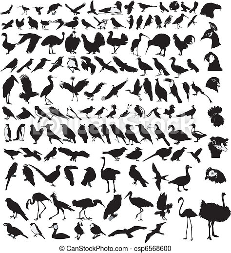 collection of birds - csp6568600